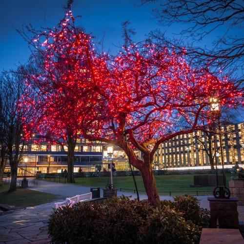 Stavanger, julbelysning